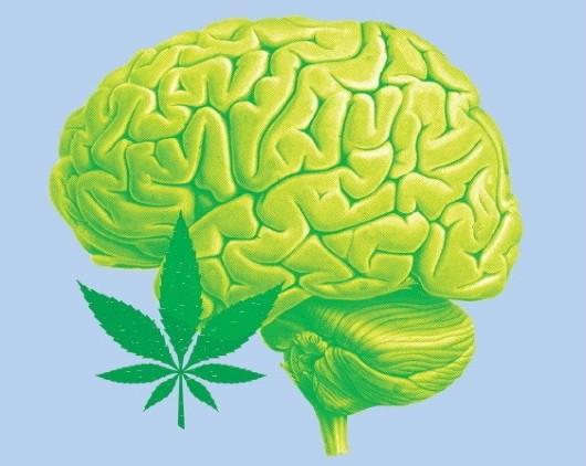 Co to jsou kanabinoidy